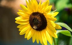 Bee's Brunch