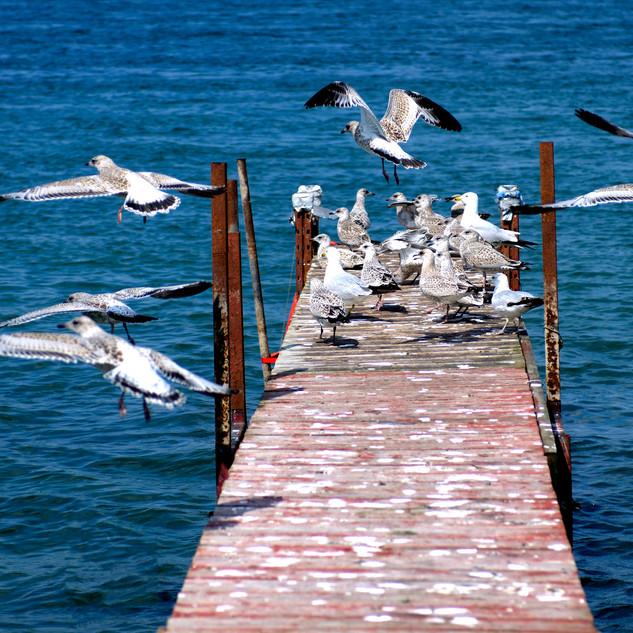 BIRDS+IN+FLIGHT-SMALL.jpg