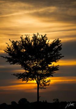 Day 276_Sunrise,Sunset_October 3