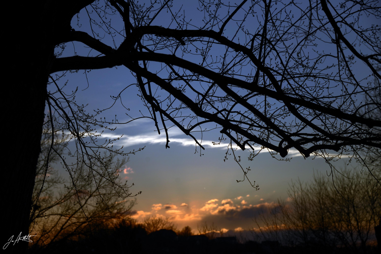 Day 58_Sunset Trees_Feb 27.jpg