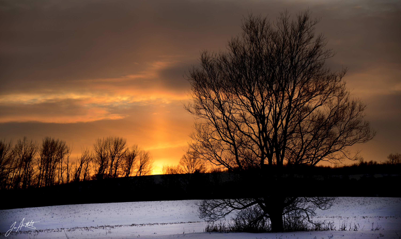 DAY 37_SUNSET TREE - Waterale Road Manlius NY_Feb 6 small.jpg