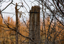 the weathered Post