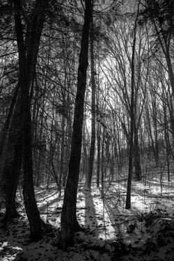 Day 17 THE FOREST