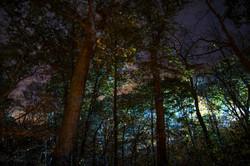 Technicolor Woods