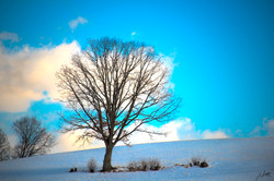 Day54_The Lone Tree_February23