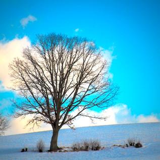 Day54_The Lone Tree_February23small.jpg