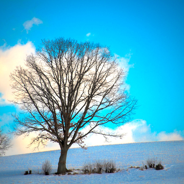 Day54_The Lone Tree_February23small.jpg