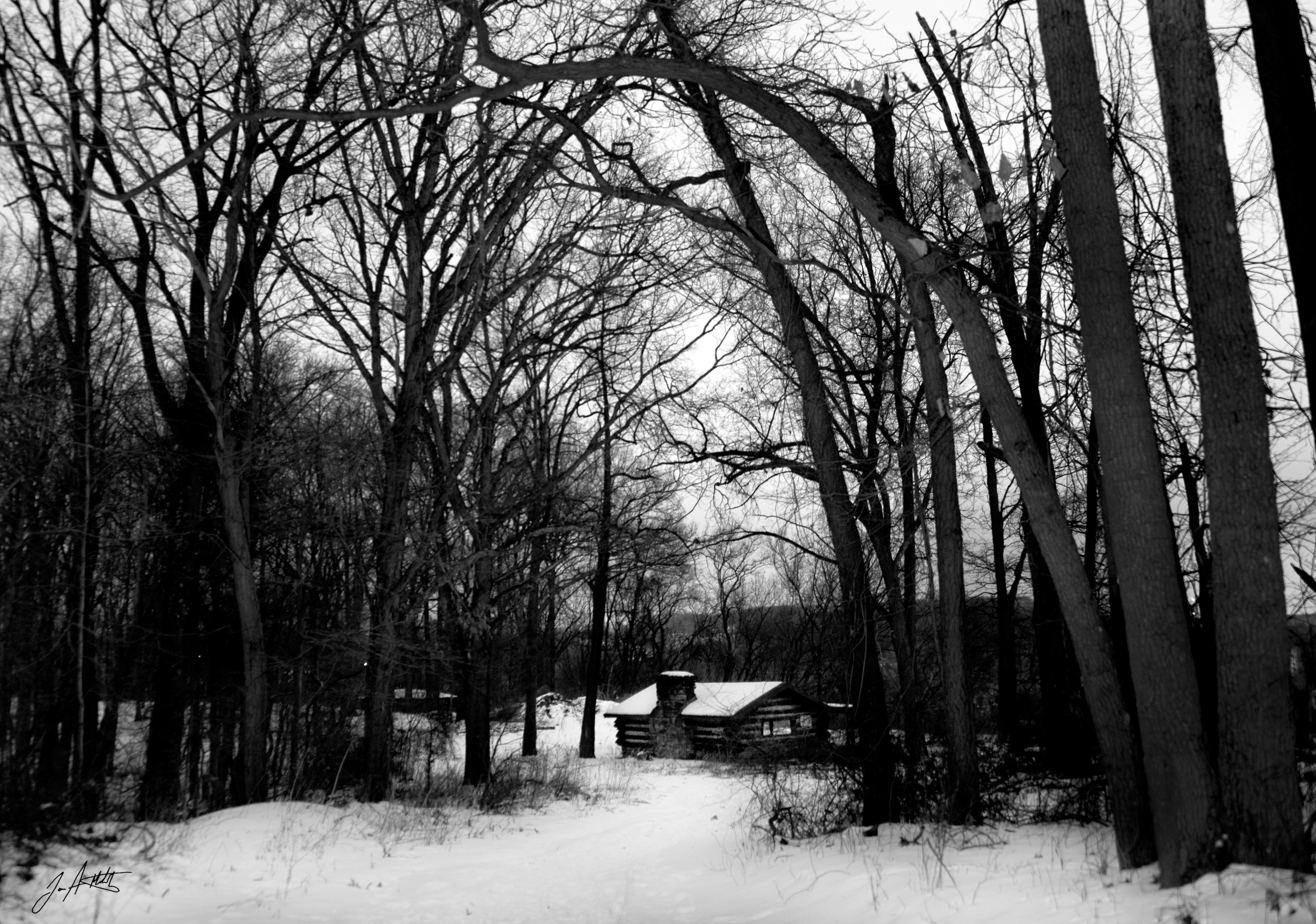 DAY 32_CABIN IN THE WOODS_FEB 1 small.jpg