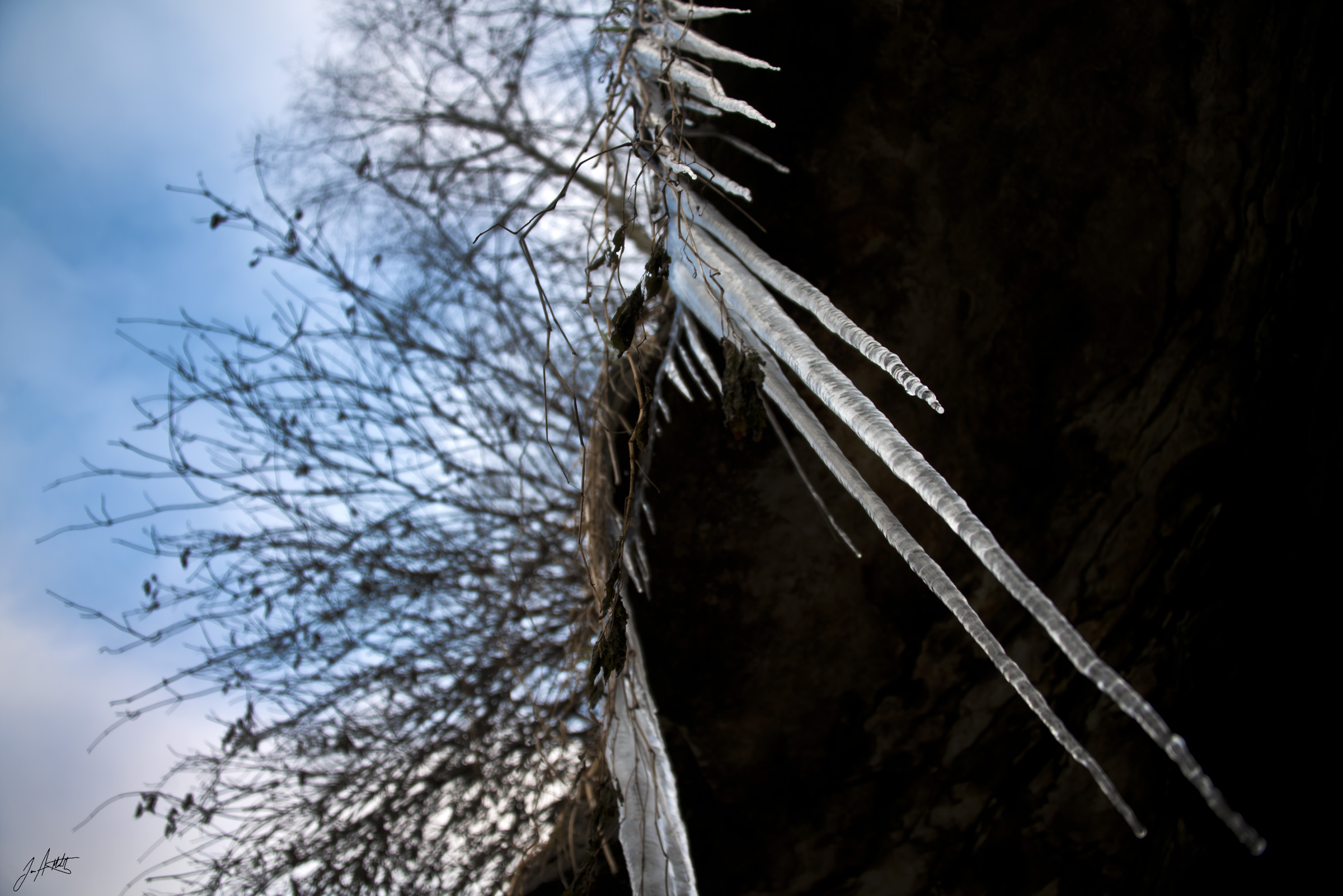 Day346_Ice Roots_December12