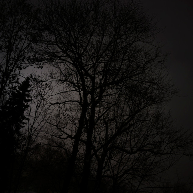Tree at Night_small.jpg