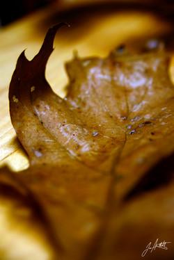 Day 26_winter leaf_Jan 26_small.jpg