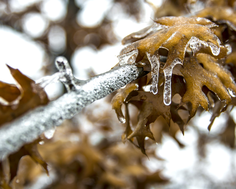 Frozen Fall