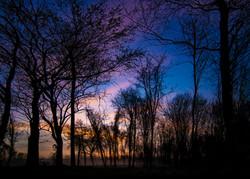 Sunrise Through the Trees THE FAN