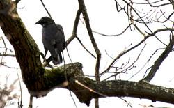 Day 93_Bird_April 3