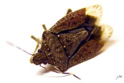 Day 54_Stink Bug_Feb 23.jpg