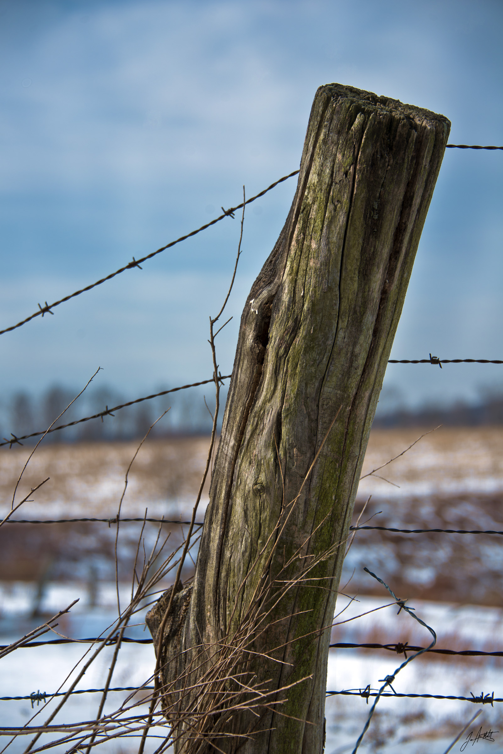 Day46_Sitting On A Barbed Wire Fence_February15
