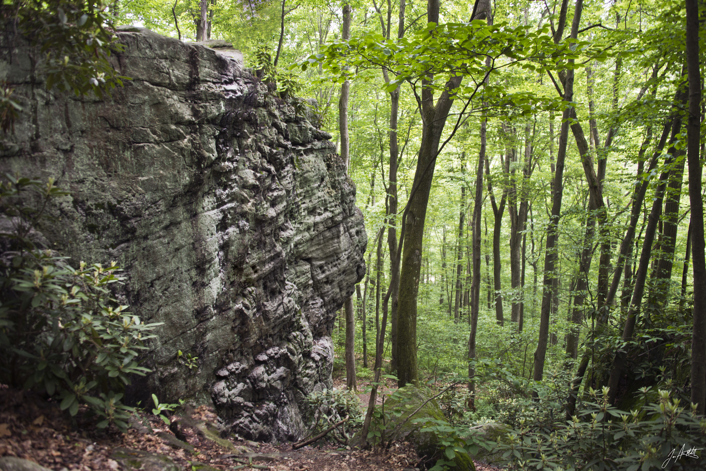 Day169_Rock Wall and forrest_June18