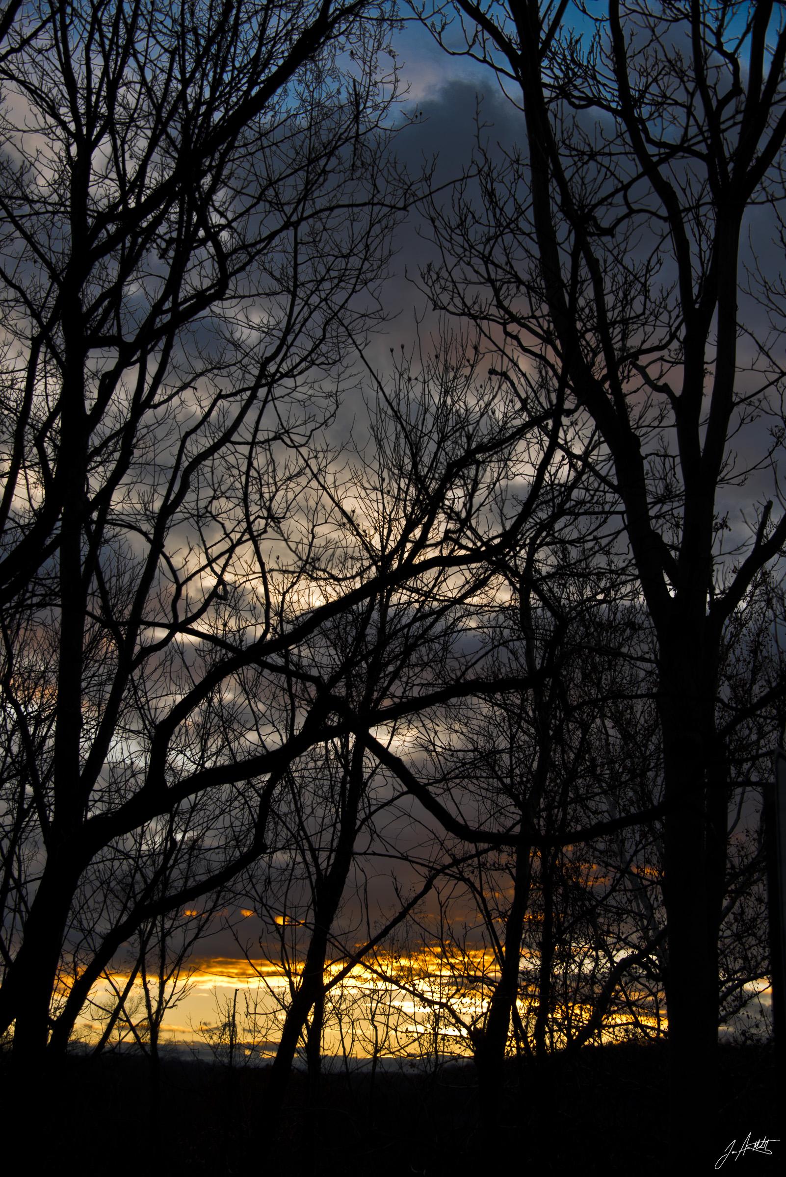 Day322_Web Of Trees_November18