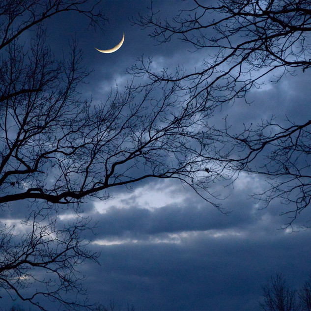 moon+in+the+trees-small.jpg
