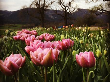 Durch Dick und Dünn - unsere Kundschaft, wir & die Blumen