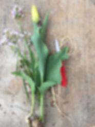 Tulpen, Pflege
