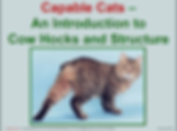 Cat Structure Cow Hock Legs  Conformation Capable Cats