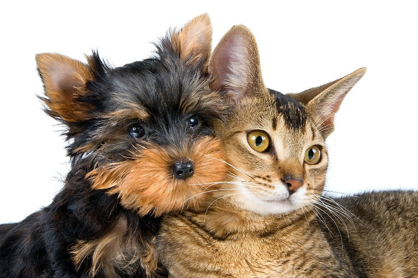 breathtaking-dog-and-cat-friends-and-cat