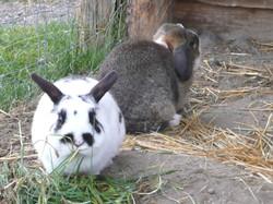 Blackie & Otis