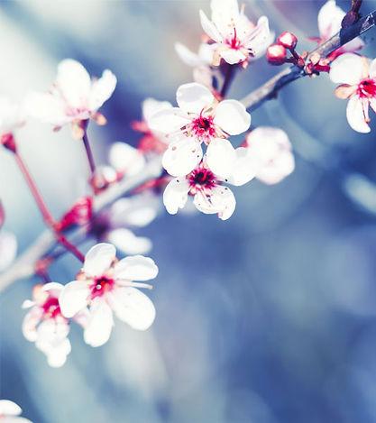 Flower_Branch.jpg
