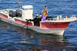 前浜昆布漁