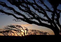 落日のみずなら林