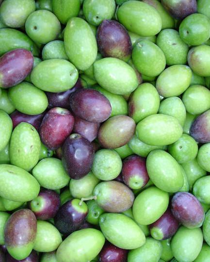 olives raw.jpg
