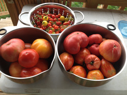 freshly picked from our garden