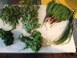 foraged greens