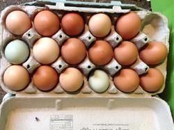 happy eggs from happy hens