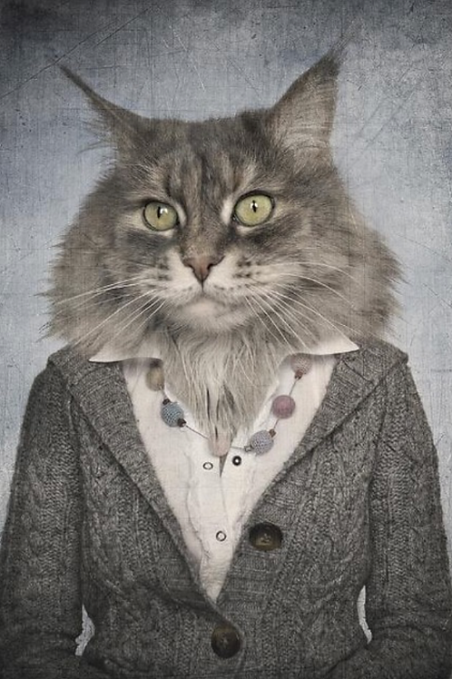 Norse Cat Poster Miss Freya