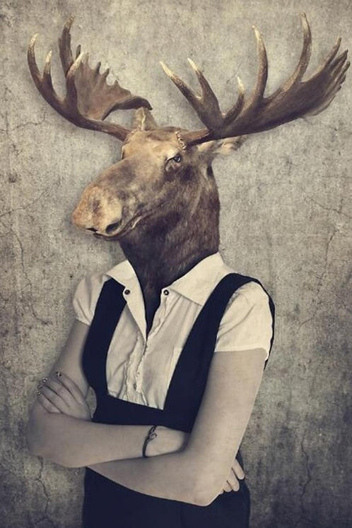 Moose Maude Poster On Canvas