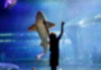 aquarium-cover.jpeg