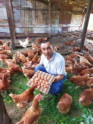 Yeldos inmitten der Hühner.jpg