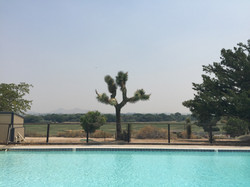 Ranch Pool looking out