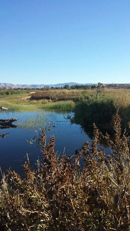 Ranch Lake Bird.JPG