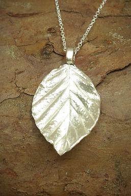 3064 - Beech leaf
