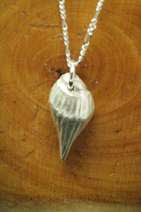 3986 - Small shell