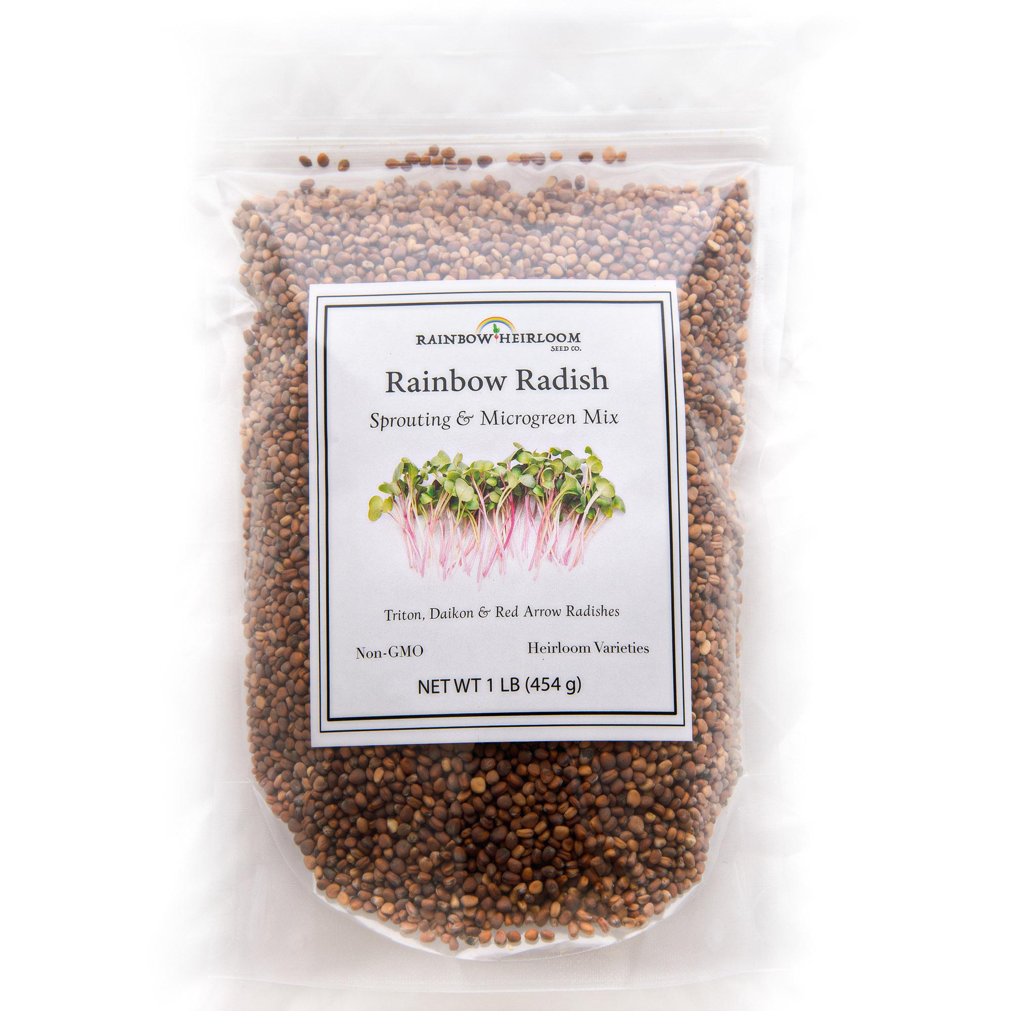 Rainbow Radish Sprouting & Microgree