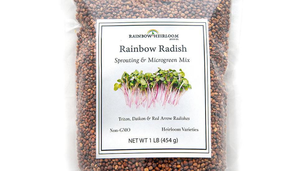 Rainbow Radish Sprouting & Microgreen Mix