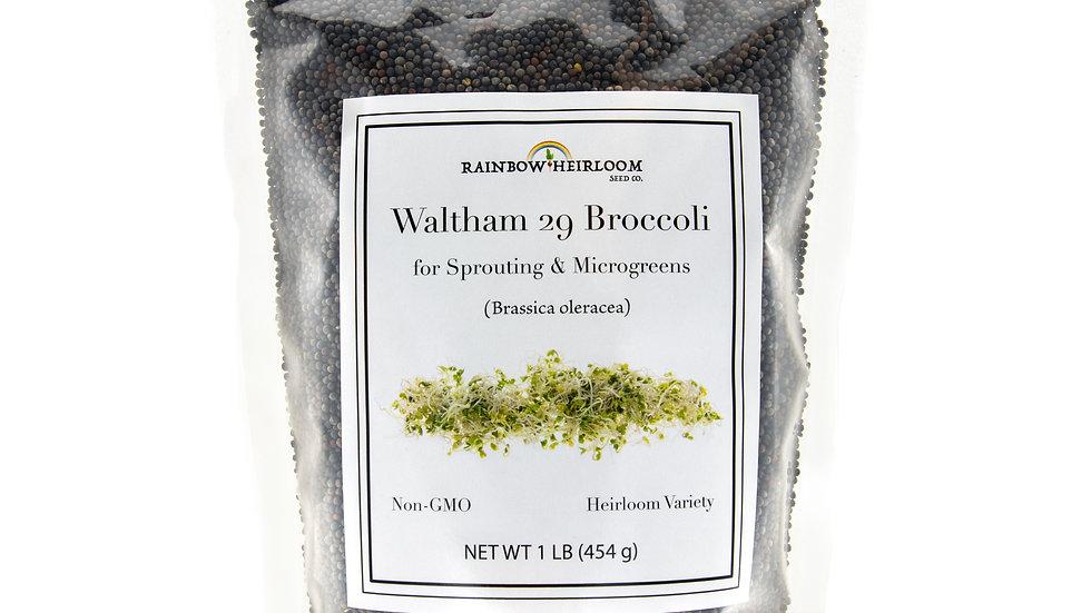 Waltham 29 Broccoli Sprouting & Microgreen Seeds