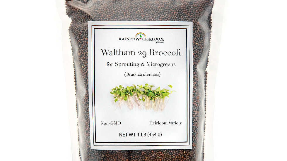 Waltham 29 Broccoli Sprouting Seed