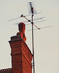 Roof Ornaments (1)