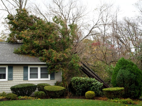 Five Things to Know About Fallen Trees and Insurance Coverage