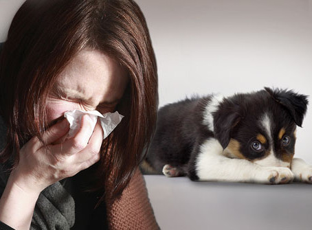 Dog Breeds That Are Better For Allergy Sufferers.